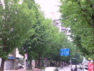お散歩・甲州街道